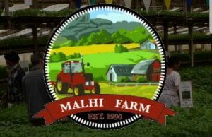 Malhi Farm